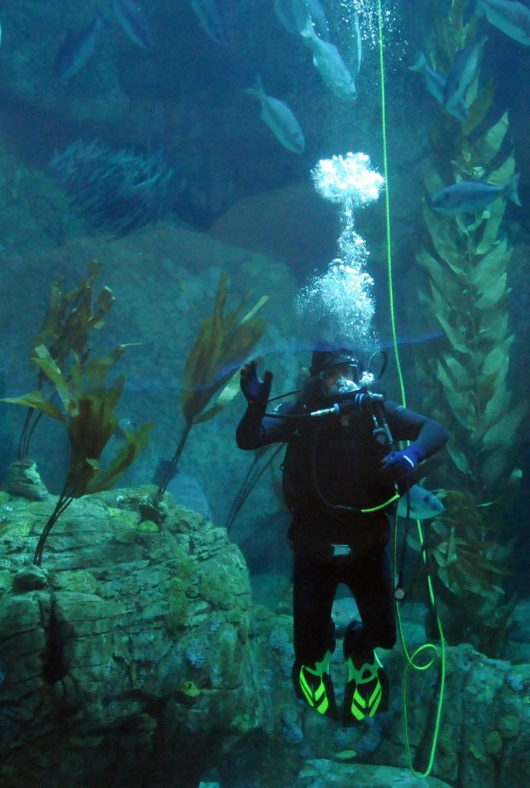 Aquarium Of The Pacific diver