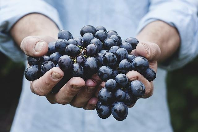 Blueberries can reduce brain inflammation