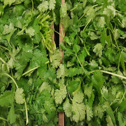 Cilantro or any of your favorite herbs will make a great chutney for your grilled trout.