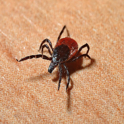 Read on for an overview of several factors regarding Lyme Disease.For a more in-depth dive, I strongly suggest that you register for the FREE & Online Chronic Lyme Disease Summit.  #ad https://tinyurl.com/y4nwwqfd